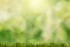Green grass with green bokeh Stock Photography