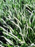 Green grass. Green branching grass stock photography