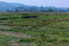 green grass before green forest in august royalty free stock photos