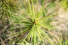 green grass beautiful nature royalty free stock photo