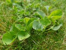 Green grass. Spring summer park garden nature field meadows stock photo