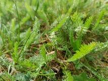 Green grass. Spring summer park garden nature field meadows royalty free stock photos