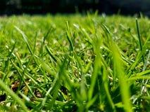 Green grass. Spring summer park garden nature field meadows royalty free stock images