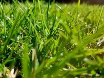 Green grass. Spring summer park garden nature field meadows royalty free stock image