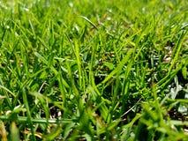 Green grass. Spring summer park garden nature field meadows stock photos