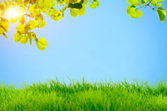 Green grass and green leaves with sun flare on blue sky backgrou Stock Photography