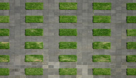 Green grass and grey asphalt Stock Photo