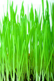 Green grass with ground Stock Photo