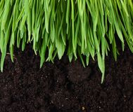 Green grass with a ground Royalty Free Stock Image