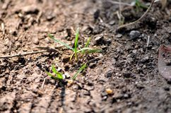 Green grass. Green grass on the ground and roots Royalty Free Stock Photography