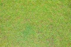 Green grass on ground texture background. Aerial view of green grass on ground texture background royalty free stock images