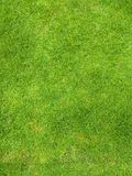 Green Grass Ground Texture royalty free stock images