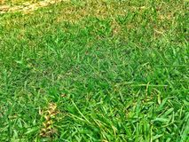Green Grass Ground Texture royalty free stock image