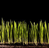 Green grass growing Stock Images