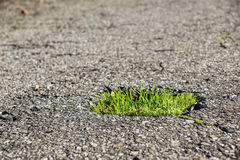 Green grass growing from the Asphalt, broken the force of Nature.  stock photo