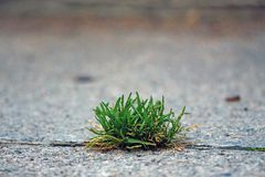 Green grass growing on asphalt. Green grass growing on the asphalt on the road stock photo