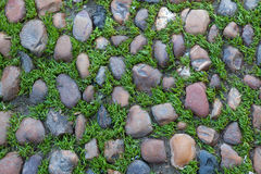 Green grass growing through the cobbled pavement. Background tex Royalty Free Stock Photo