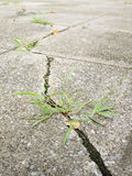 Green grass growing from crack in old asphalt pavement. Texture royalty free stock photos