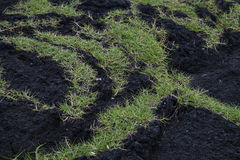 Grass on volcanic rock Royalty Free Stock Images