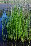 Green grass growing in dark water, organic plant texture detail, landscape with river. On background stock images
