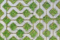 Green grass growing between elements of paving tiles as a background or texture.  Stock Image