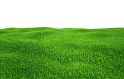 Green grass growing on hills with white background. Top view. 3d render Stock Photos