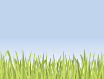 Green Grass Growing Nicely Royalty Free Stock Images