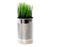 Green grass growing from a recyled aluminim Royalty Free Stock Photos