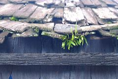 Green grass growing in the roof of a house made of wood. Green grass growing in the roof of a house made of wood royalty free stock photo