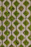 Green grass growing through square cells of eco permeable paveme Stock Photo