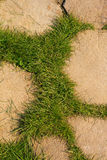 Green grass growing through stone Royalty Free Stock Photo