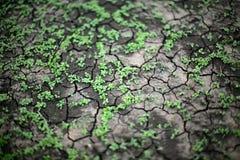Green grass growing trough dead soil Stock Photography