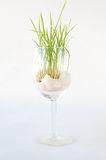 Green Grass Growing in a Wine Glass Stock Image