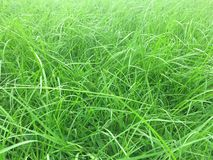 Green grass grows all around background spring nature park royalty free stock photography