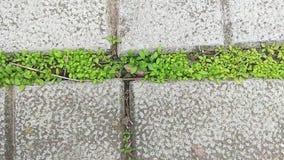 Green grass grows through concrete slabs