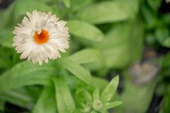 Flower with white petals photographed from above Royalty Free Stock Photos