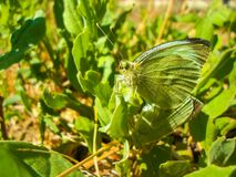 Green grass grows in the garden and green butterfly in the grass, very beautiful landscape. background picture