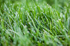 Green grass grows Stock Photography