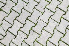 Green grass grows through modern gray cobblestone Royalty Free Stock Photography