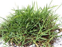 Green grass hayrick Stock Photos