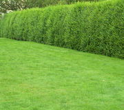 Green grass with hedges Stock Photo