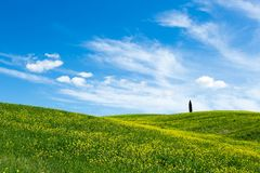 Green grass hill, blue sky and a solitary cypress royalty free stock photography