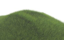 Green grass Stock Image