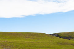 Green grass hill landscape Stock Image