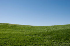 Green grass hills Stock Image
