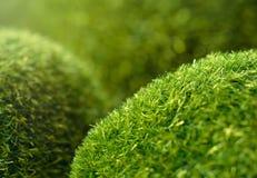 Green grass hills Royalty Free Stock Photo