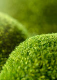 Green grass hills Royalty Free Stock Image