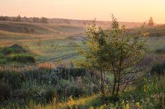 Green grass hills with small trees in summer sunrise Stock Image