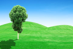 Green grass hills and tree with sky Stock Photography