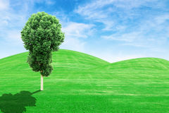 Green grass hills and tree with sky Royalty Free Stock Photography